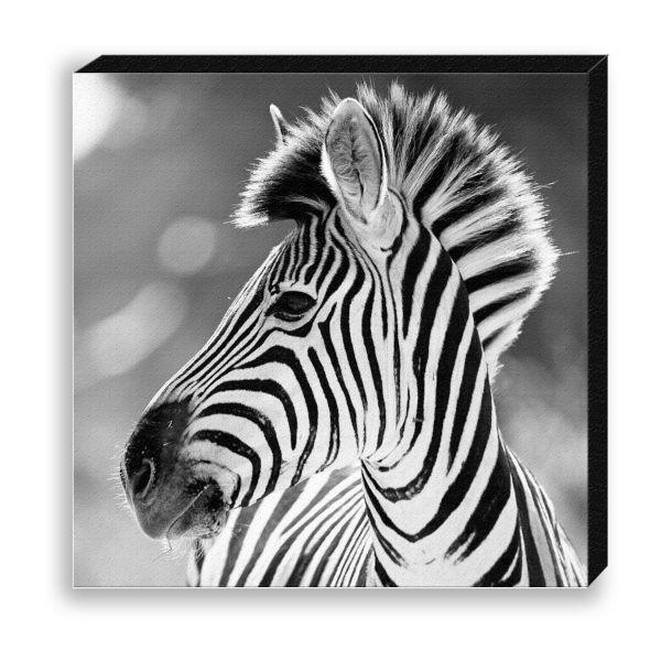 """Creative Nature Fotodruck """"Zebra Girl"""""""