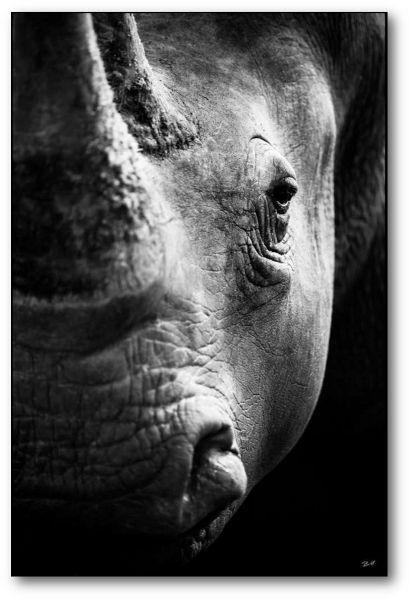 """Creative Nature Fotodruck """"Rhino"""""""