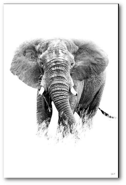 "Creative Nature Fotodruck ""Elephant"""