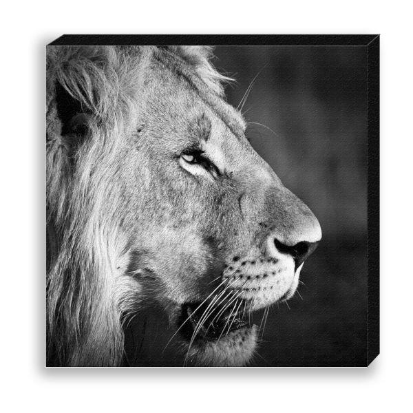 """Creative Nature Fotodruck """"Lion Portrait"""""""