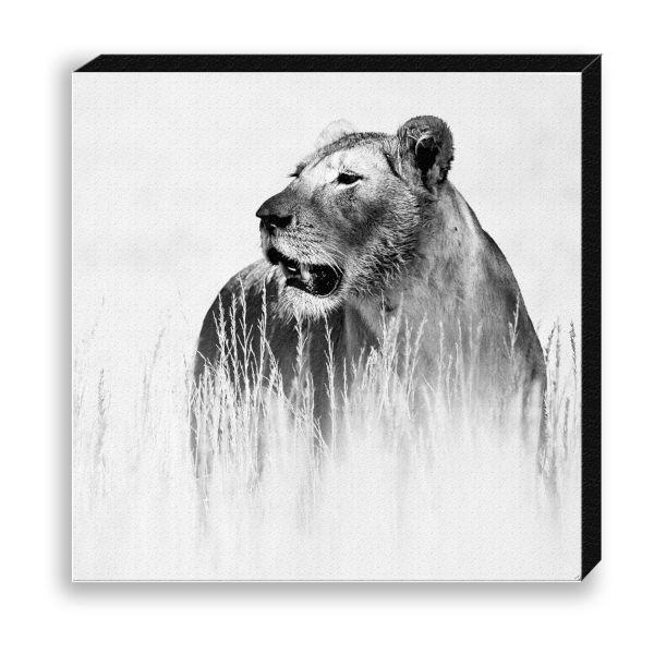 Creative Nature Photodruck auf Canvas Lioness Savanne