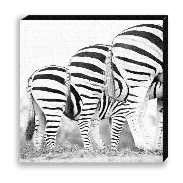 "Creative Nature Fotodruck ""Zebra Tripple Rear"""