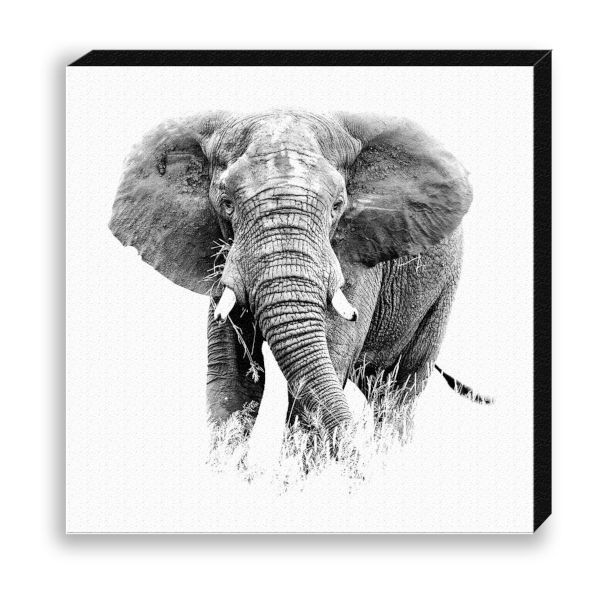 "Creative Nature Fotodruck ""Elephant Front"""