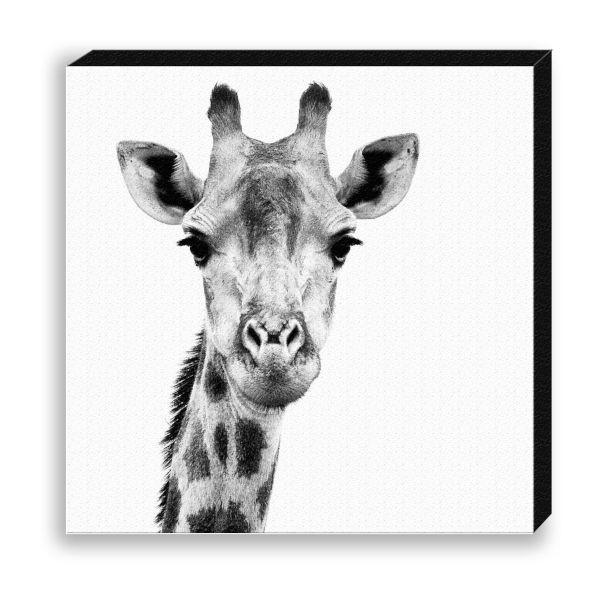 "Creative Nature Fotodruck ""Giraffe Head"""