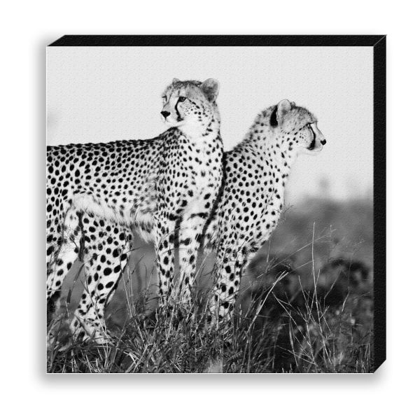 "Creative Nature Fotodruck ""Cheetah Twins"""