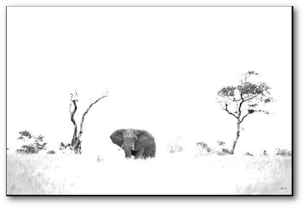 "Creative Nature Fotodruck ""Elephant Savanne"""