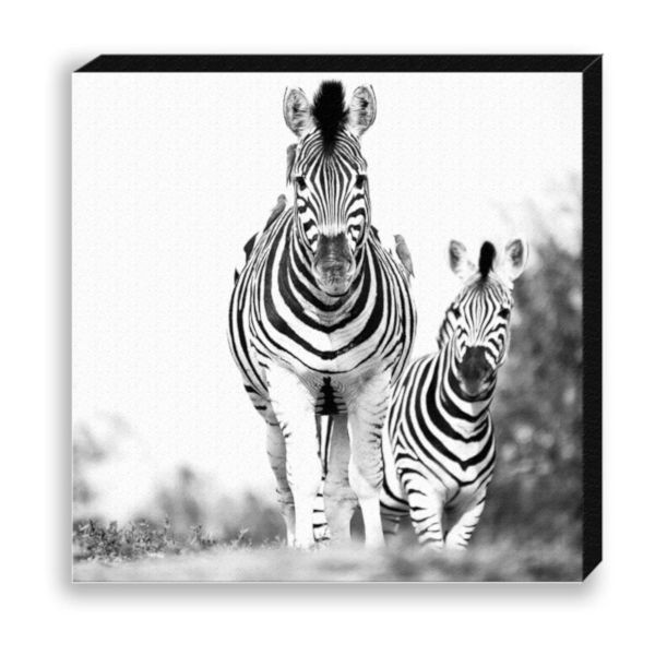 "Creative Nature Fotodruck ""Zebra Running"""