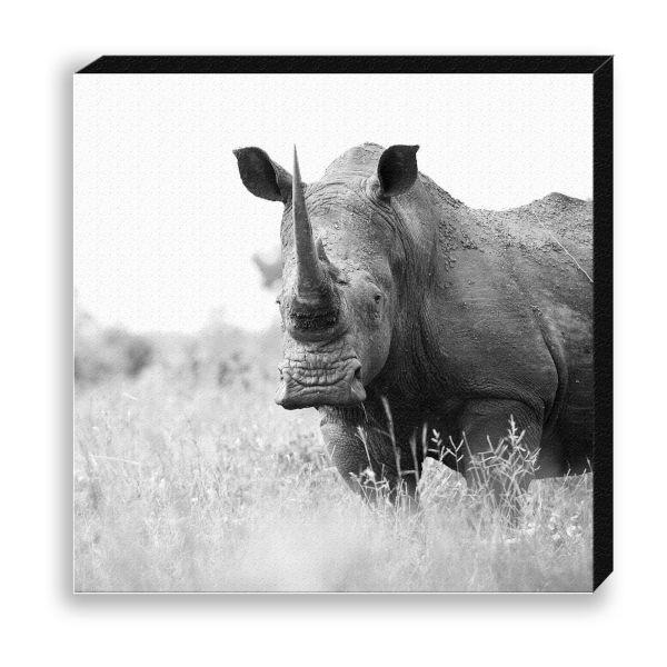 Creative Nature Photodruck auf Canvas Rhino Savanne