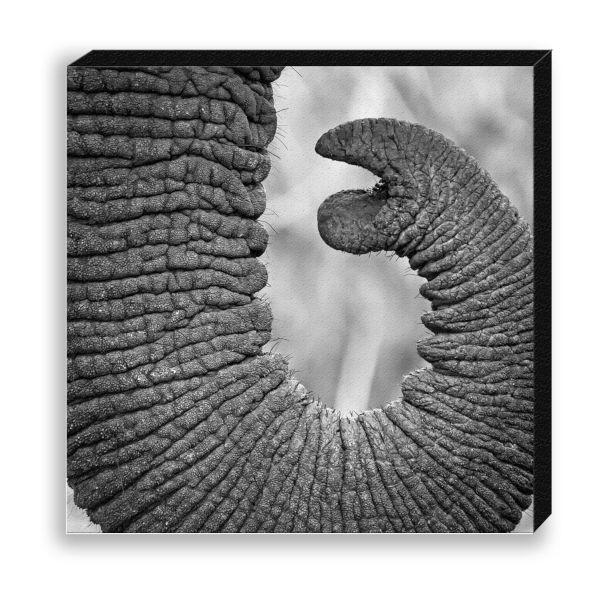 """Creative Nature Fotodruck """"Elephant Trunk"""""""