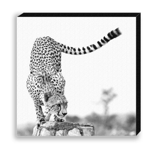 "Creative Nature Fotodruck ""Cheetah Elegant"""