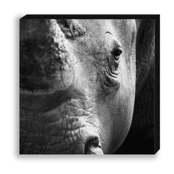 "Creative Nature Fotodruck ""Rhino Close-up"""